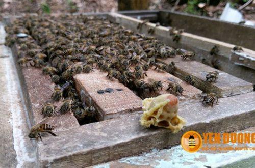 Địa chỉ bán MẬT ONG tại Hà Nội 100% tự nhiên, nguyên chất!