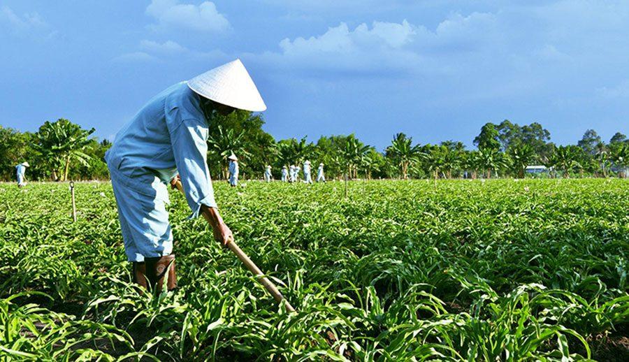 Công nhận làm cỏ vườn Trinh Nữ Hoàng Cung - Crila