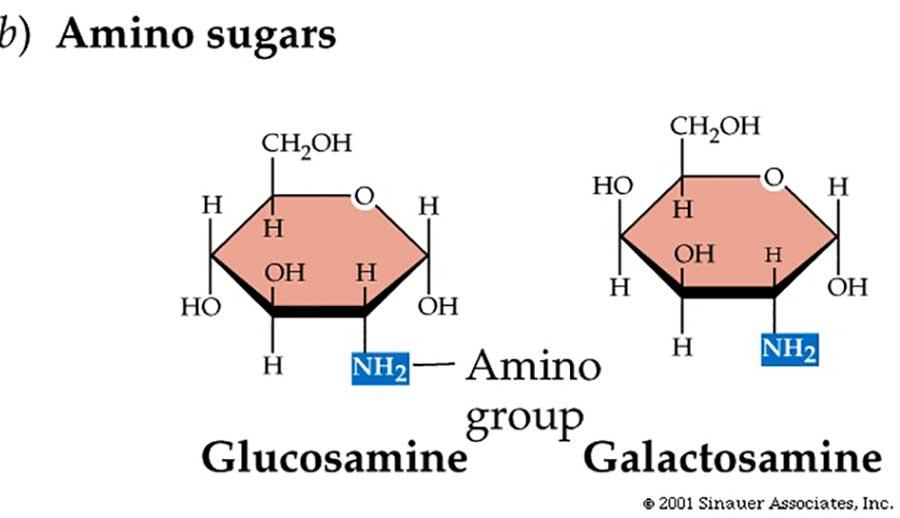 Amino sugar